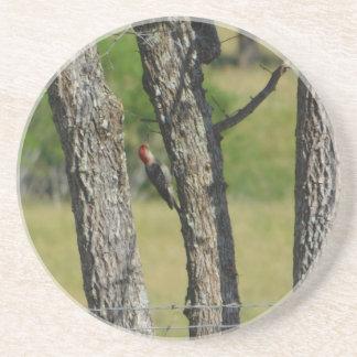 Porta copos da árvore do pica-pau