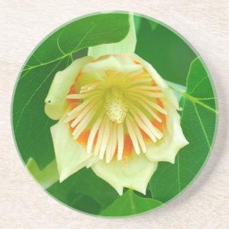Porta copos da tulipa da árvore de álamo