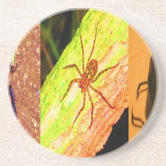 Porta-copos De Arenito Costa-Rica selvagem - aranhas, baratas e insetos