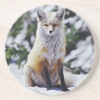 Porta-copos De Arenito Fox vermelho que senta-se no banco da neve,