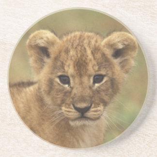Porta-copos De Arenito Kenya. Leão Cub (Panthera Leo)
