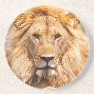 Porta-copos De Arenito Pares de leões africanos, Panthera leo, Tanzânia