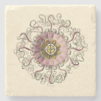 Porta copos de Haeckel Peromedusa Porta-copos De Pedra