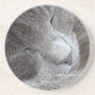 Porta copos de sono bonito do gatinho