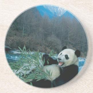 Porta-copos Panda que come o bambu pelo banco de rio, Wolong,