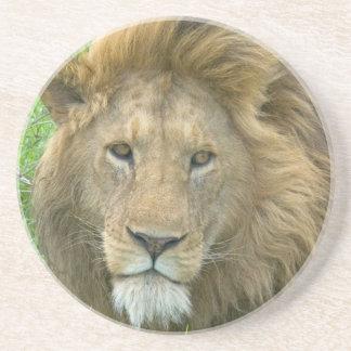 Porta-copos Retrato masculino do leão, East Africa, Tanzânia,