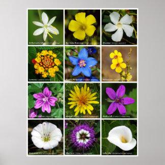 Poster 2 da flor