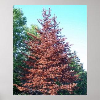 Poster alaranjado do pinheiro