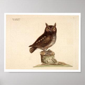 Poster animal do vintage - coruja