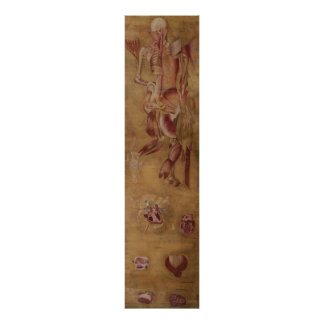 Póster Antique silk painting myology muscles