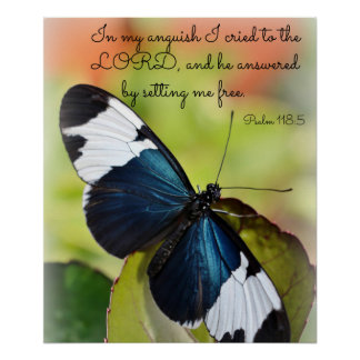 Poster azul da borboleta de Longwing Pôster