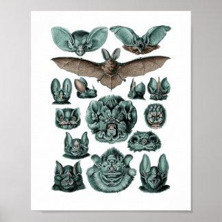 Póster Bastões por Ernst Haeckel