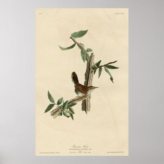 Póster Bird, America, Bewick Wren, Audubon, Vintage