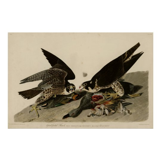 Poster Bird, America, Great Footed Hawk, Audubon, Vintage