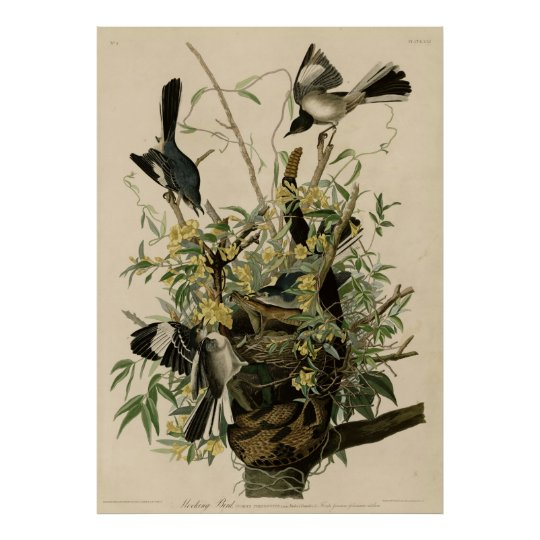 Poster Bird, America, Mocking Bird, Audubon, Vintage