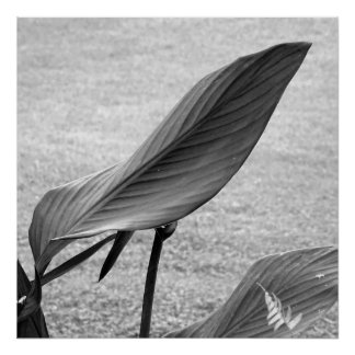Poster Black and white foliage 01
