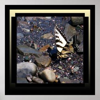 Poster bonito da borboleta pôster