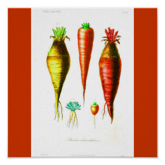 Poster-Botanicals-Cenoura