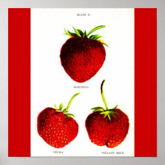 Poster-Botanicals-Morangos 5