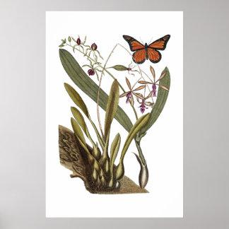 Poster botânico do vintage antigo