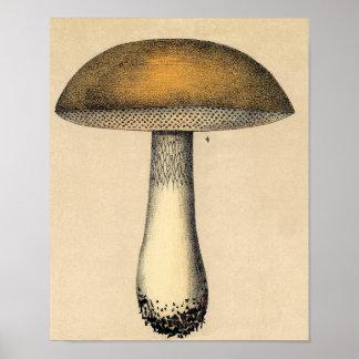Poster botânico do vintage - cogumelo pôster