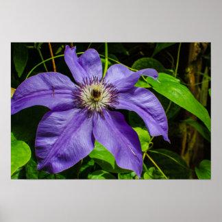 Poster botânico floral