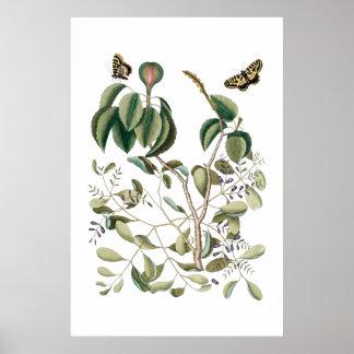 poster botânico verde do vintage pôster