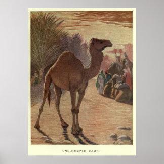 Póster Camelo Pintura do vintage (1909)