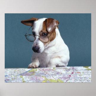 Póster Cão com vidros de leitura que estuda o mapa