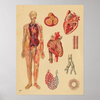 Poster Carta médica da anatomia humana das artérias do