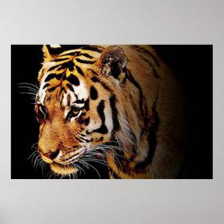 Poster com tigre