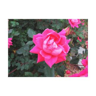 Poster cor-de-rosa das canvas do solteiro