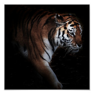 Poster da busca dos tigres