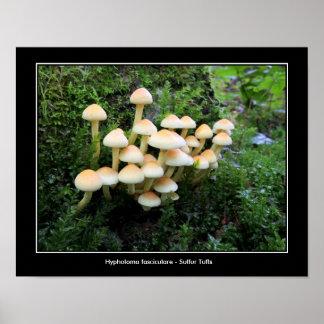 Poster da foto do cogumelo do topete do enxofre