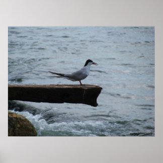 Poster da fotografia da gaivota