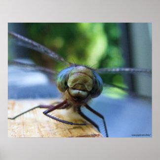Poster da fotografia da libélula