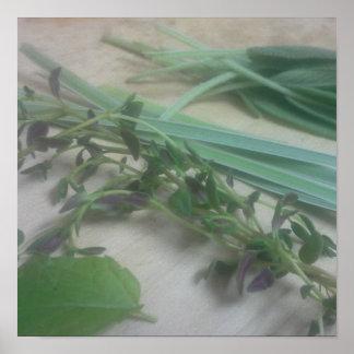 Poster da fotografia das ervas da cozinha