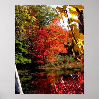 Poster da fotografia do folhagem de outono da