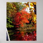 Poster da fotografia do folhagem de outono da árvo