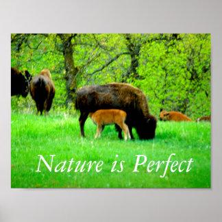Poster da natureza