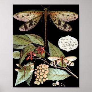 Poster da natureza do vintage