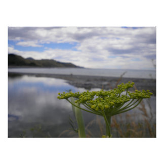 Poster da paisagem de Nova Zelândia