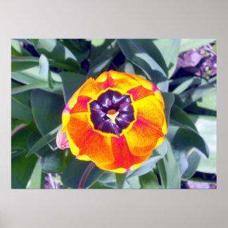 Poster da tulipa 1 do copo da flor