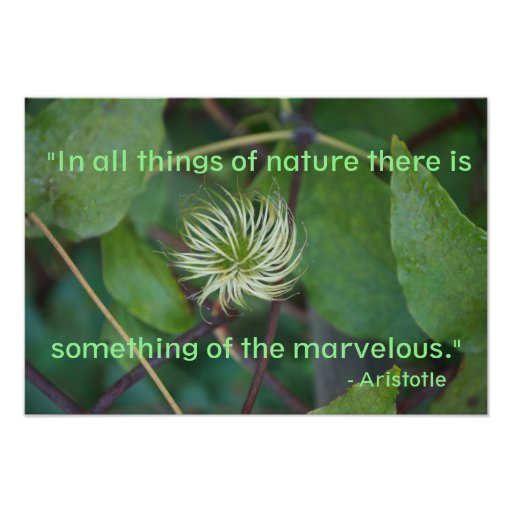 Poster das citações da natureza de Aristotle