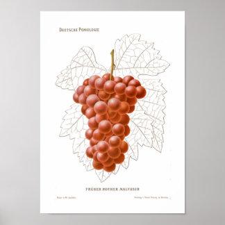 Poster das uvas vermelhas
