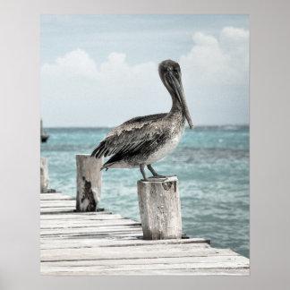 Poster (~ de REFRIGERAÇÃO do design do pelicano)