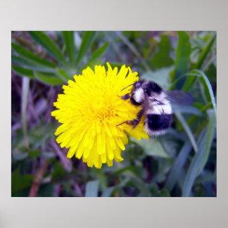 Poster distorcido da abelha