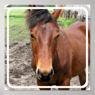 Poster do cavalo do puro-sangue da castanha