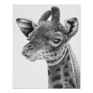 Poster do girafa do bebê pôster