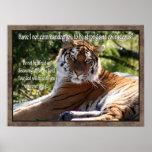 Poster do tigre do 1:9 de Joshua